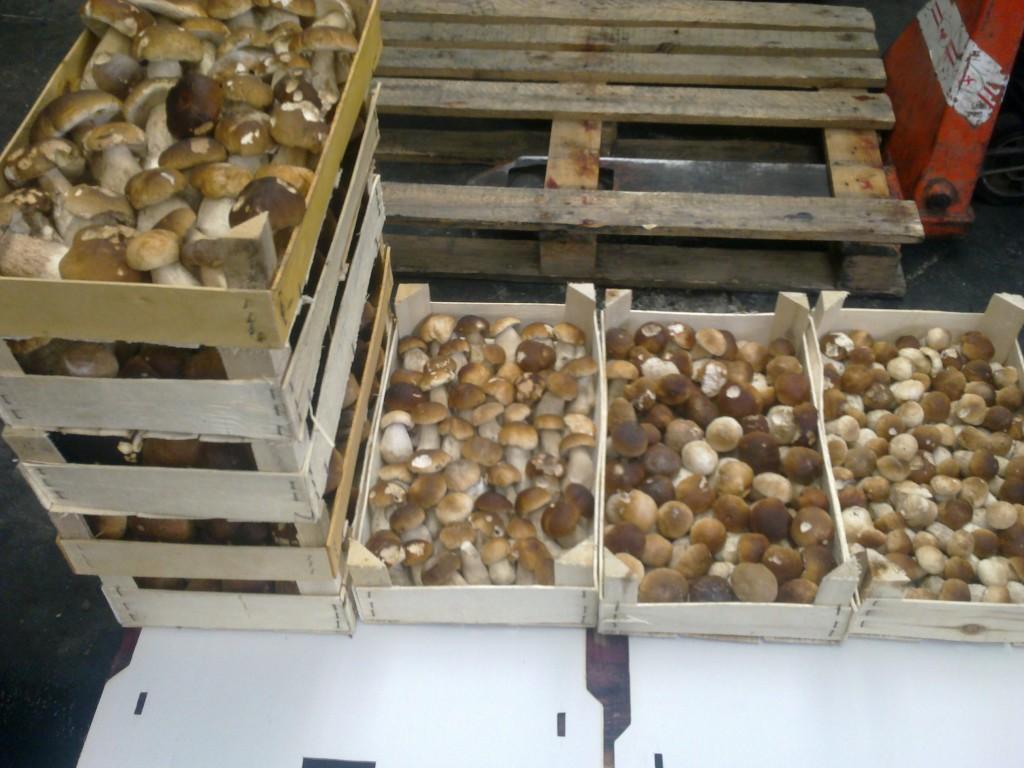 kauf von pilzen karex gro handel mit pilzen und beeren frisch und gefroren. Black Bedroom Furniture Sets. Home Design Ideas
